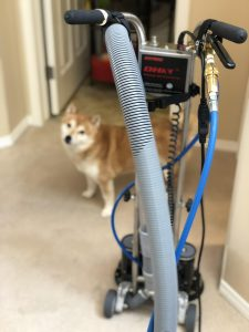 rotovac carpet cleaner with dog