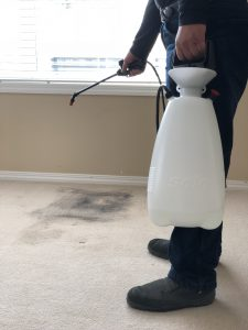 3 Reasons You'll Want a Professional to Clean Your Carpet - Fresh Air Furnace - Furnace Services Calgary